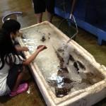 """(有)大幸水産 当社は活物、地物、近海物を中心に鮮度・品質にこだわり、""""うまい""""魚を取り扱っています。小魚等を泳がしていますので、活きた魚を直に触れることもできます。"""